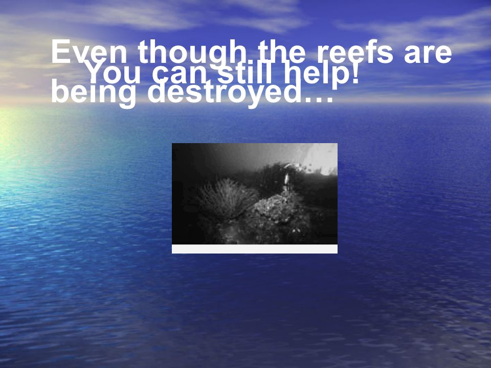 Even though the reefs are being destroyed…