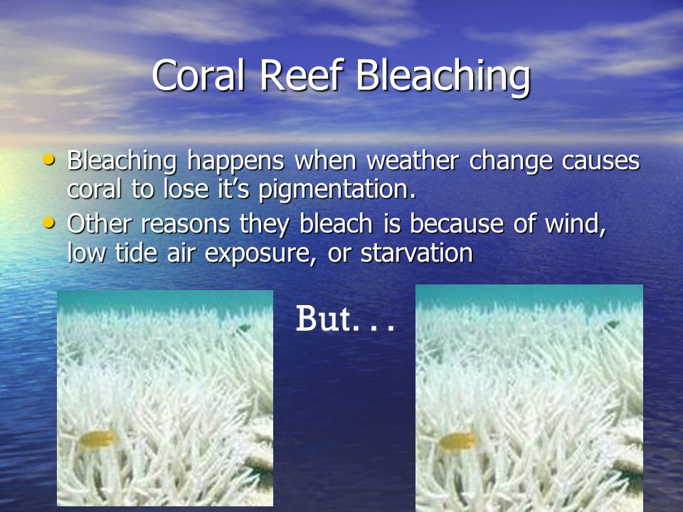 Coral Reef Bleaching But. . .