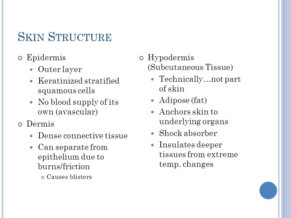 Skin Structure Epidermis Outer layer