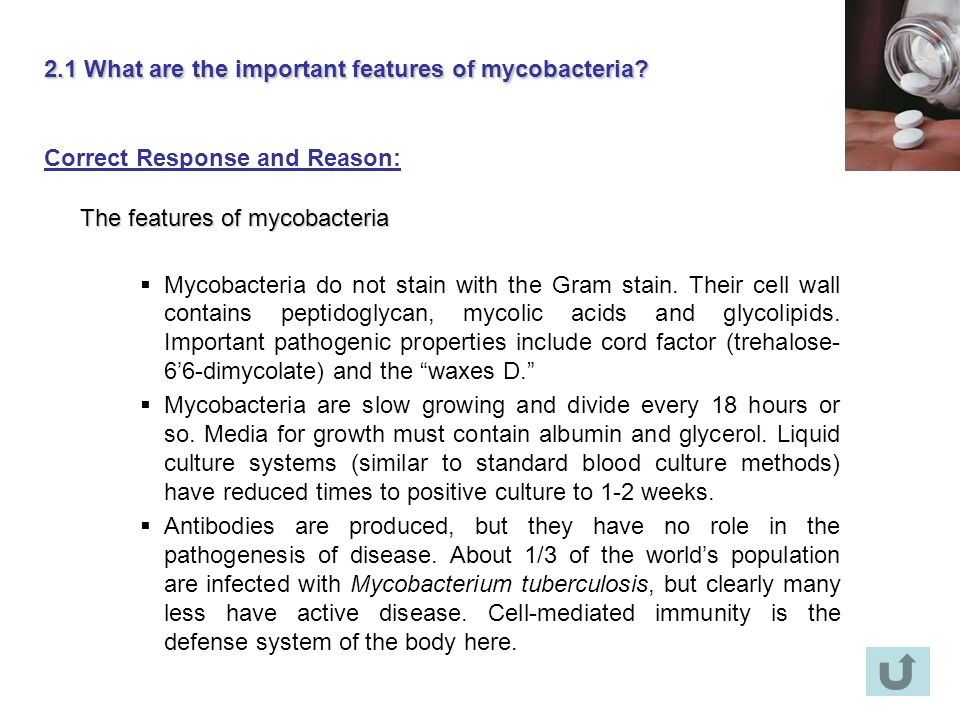 2.1 What are the important features of mycobacteria