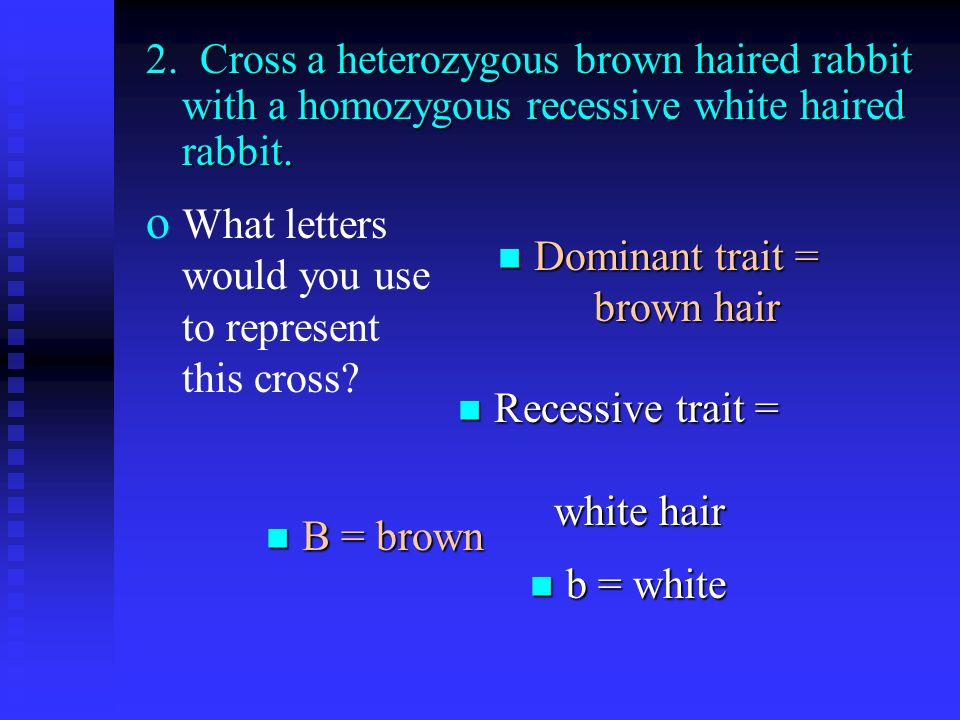 2. Cross a heterozygous brown haired rabbit with a homozygous recessive white haired rabbit.