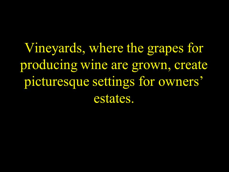 Vineyards, where the grapes for producing wine are grown, create picturesque settings for owners' estates.