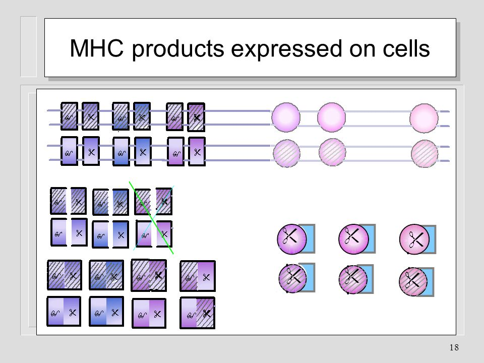 MHC products expressed on cells