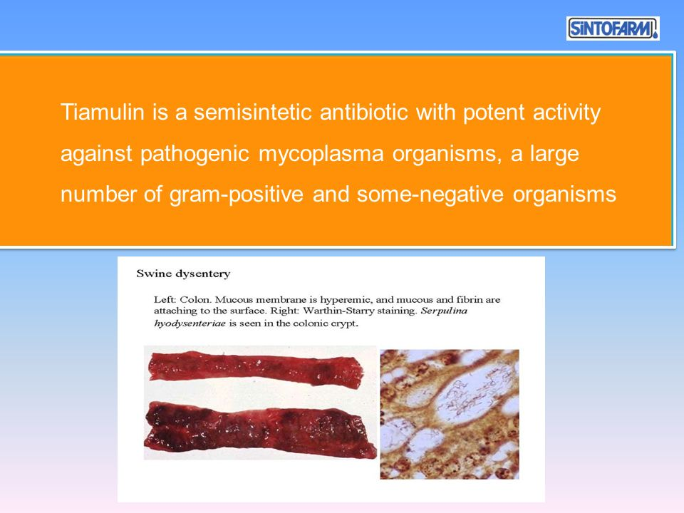 Tiamulin is a semisintetic antibiotic with potent activity against pathogenic mycoplasma organisms, a large number of gram-positive and some-negative organisms