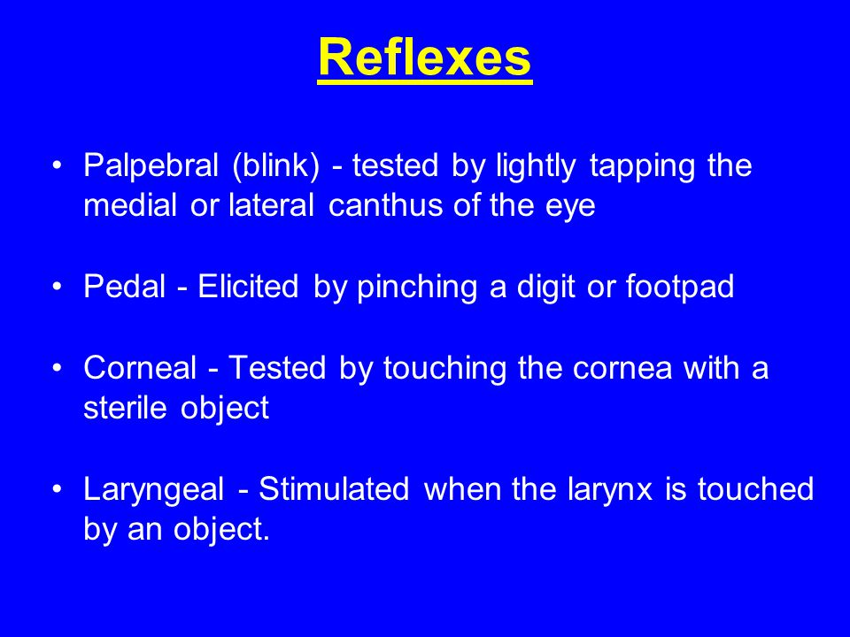 Reflexes Palpebral (blink) - tested by lightly tapping the medial or lateral canthus of the eye. Pedal - Elicited by pinching a digit or footpad.