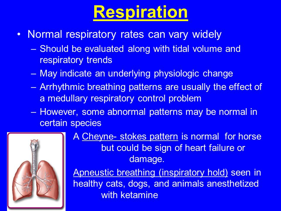 Respiration Normal respiratory rates can vary widely