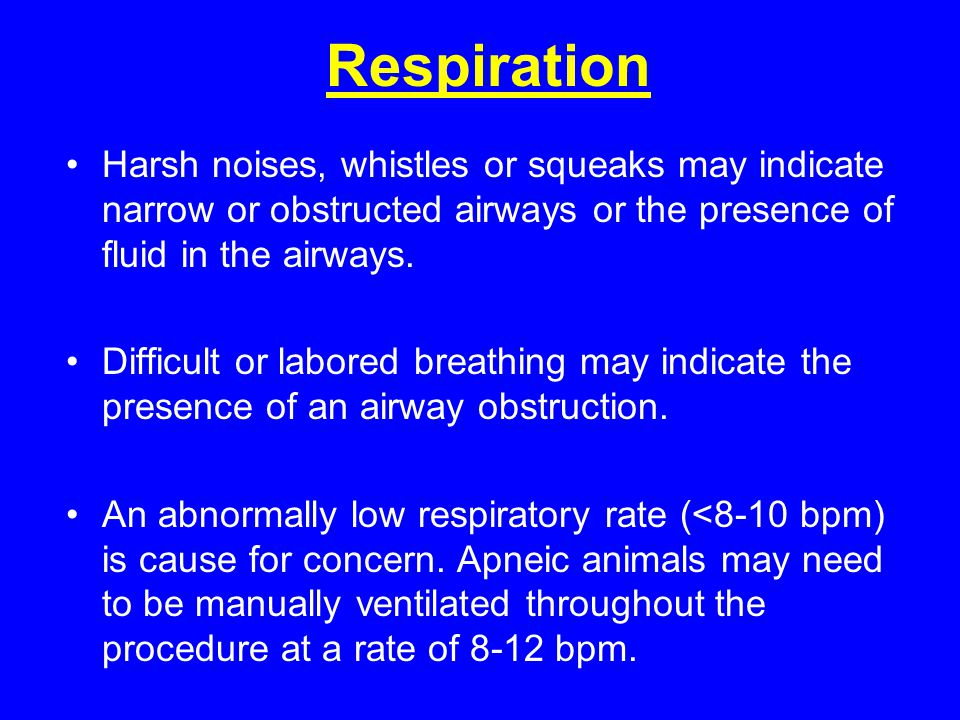 Respiration Harsh noises, whistles or squeaks may indicate narrow or obstructed airways or the presence of fluid in the airways.
