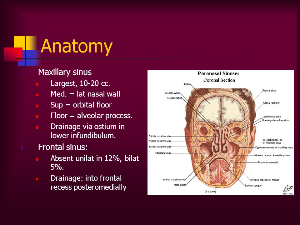 Diseases of the Nose & Sinuses - ppt video online download