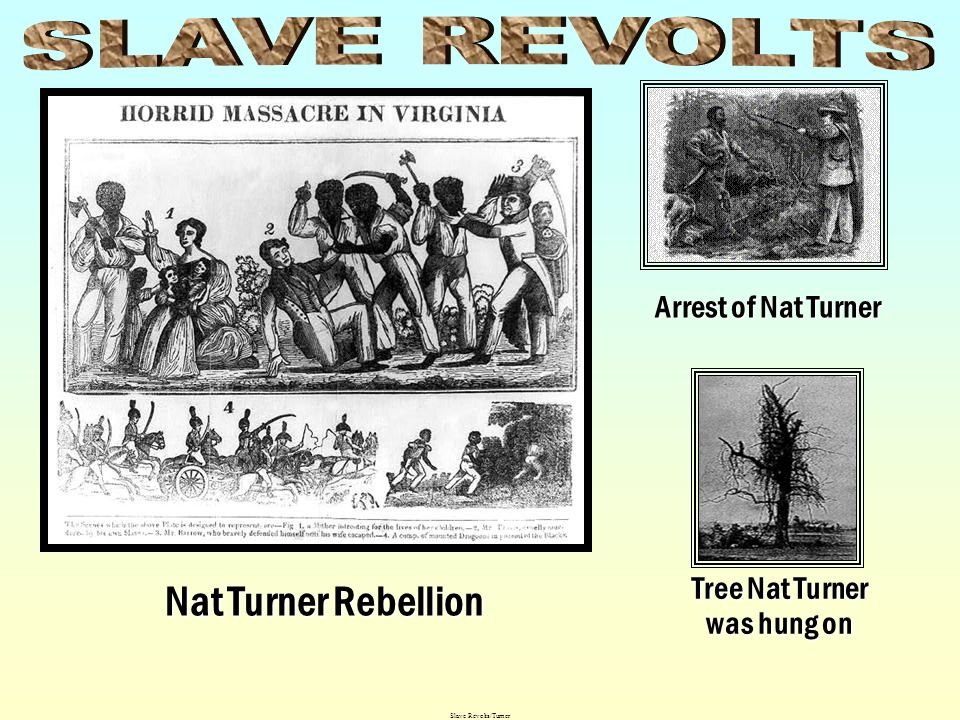 Tree Nat Turner was hung on