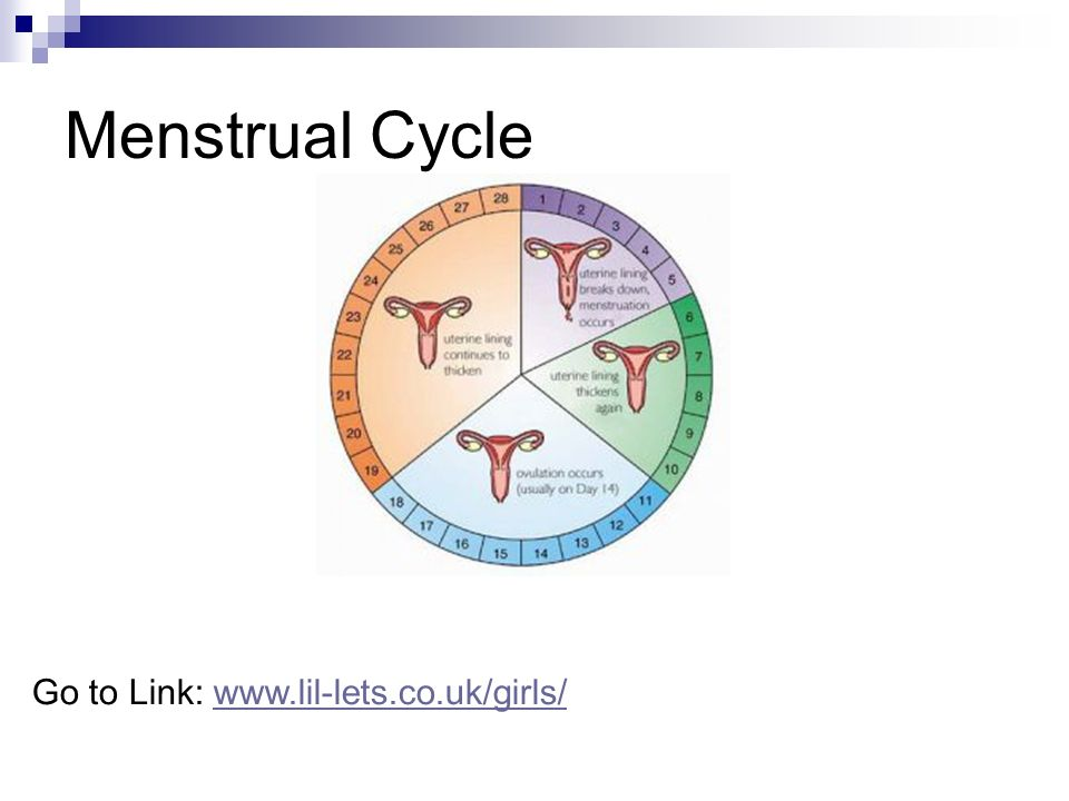 Menstrual Cycle Go to Link: