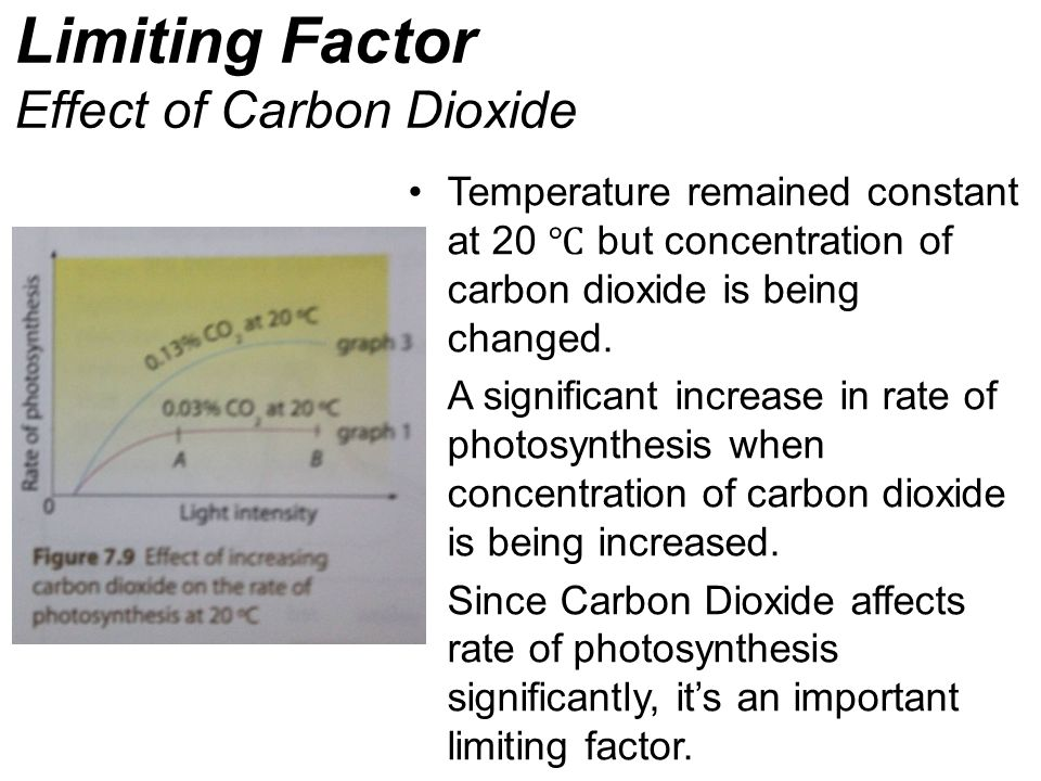 Limiting Factor Effect of Carbon Dioxide