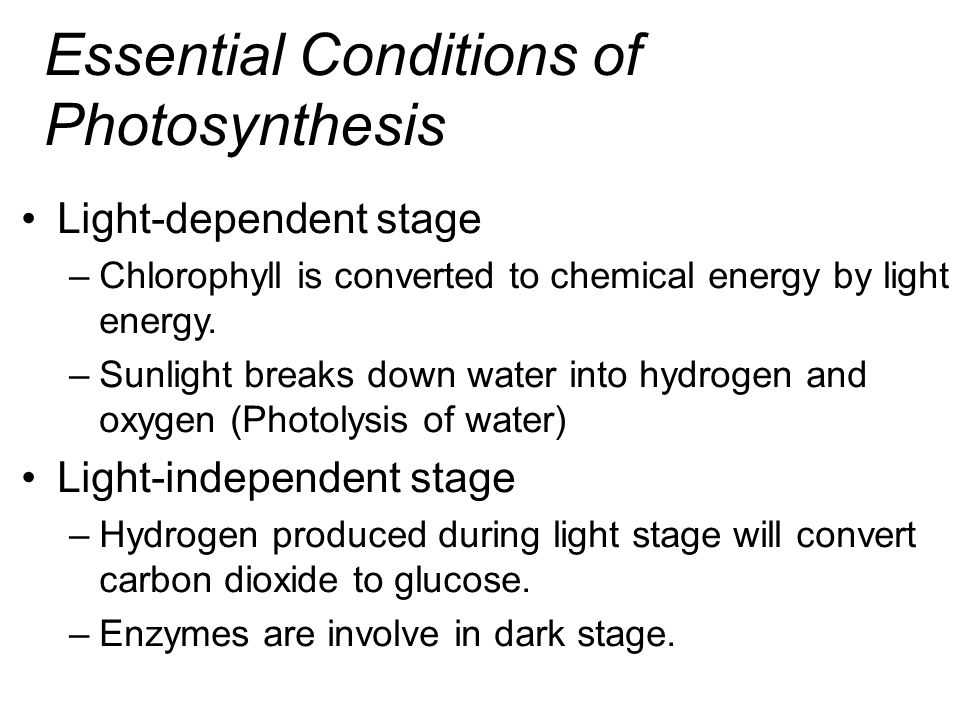 Essential Conditions of Photosynthesis