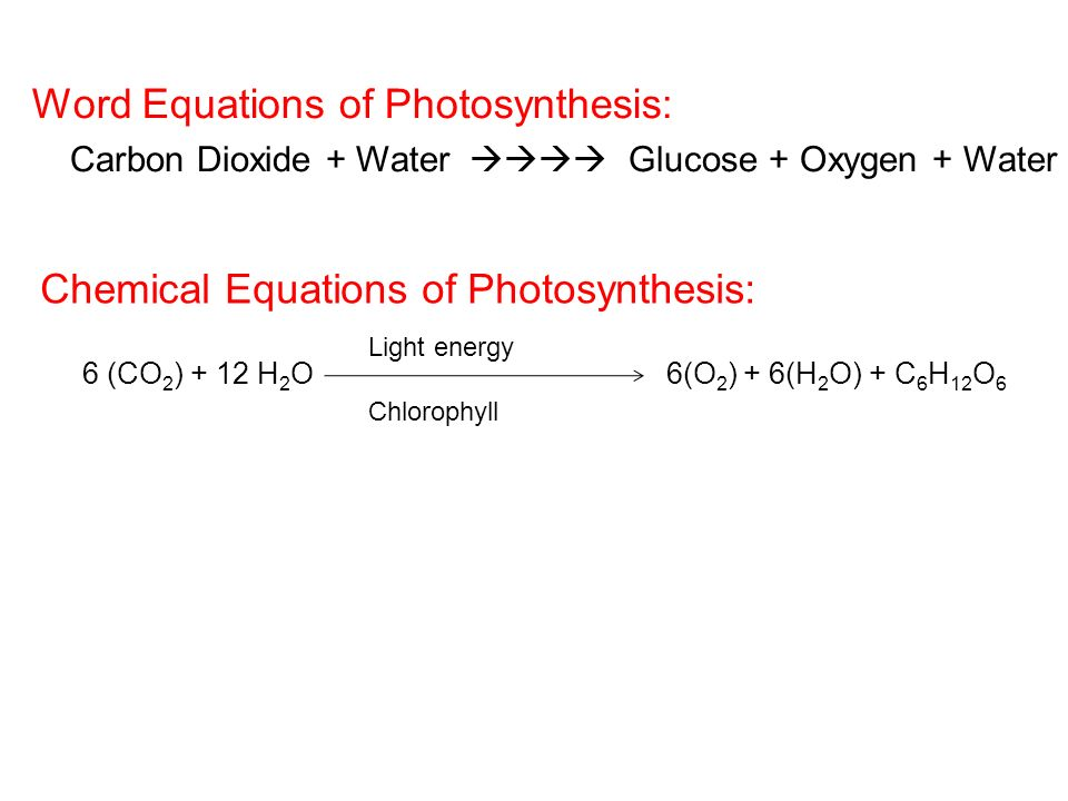 Word Equations of Photosynthesis: