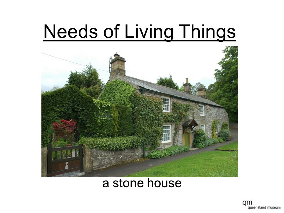 Needs of Living Things a stone house