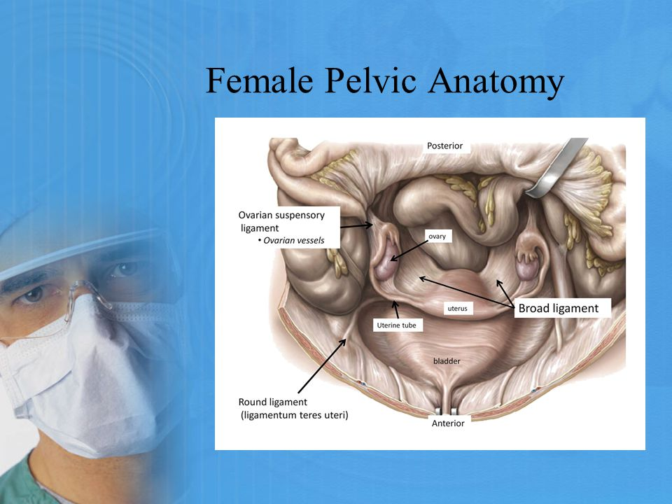 Female Pelvic Anatomy