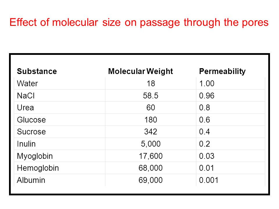 Effect of molecular size on passage through the pores