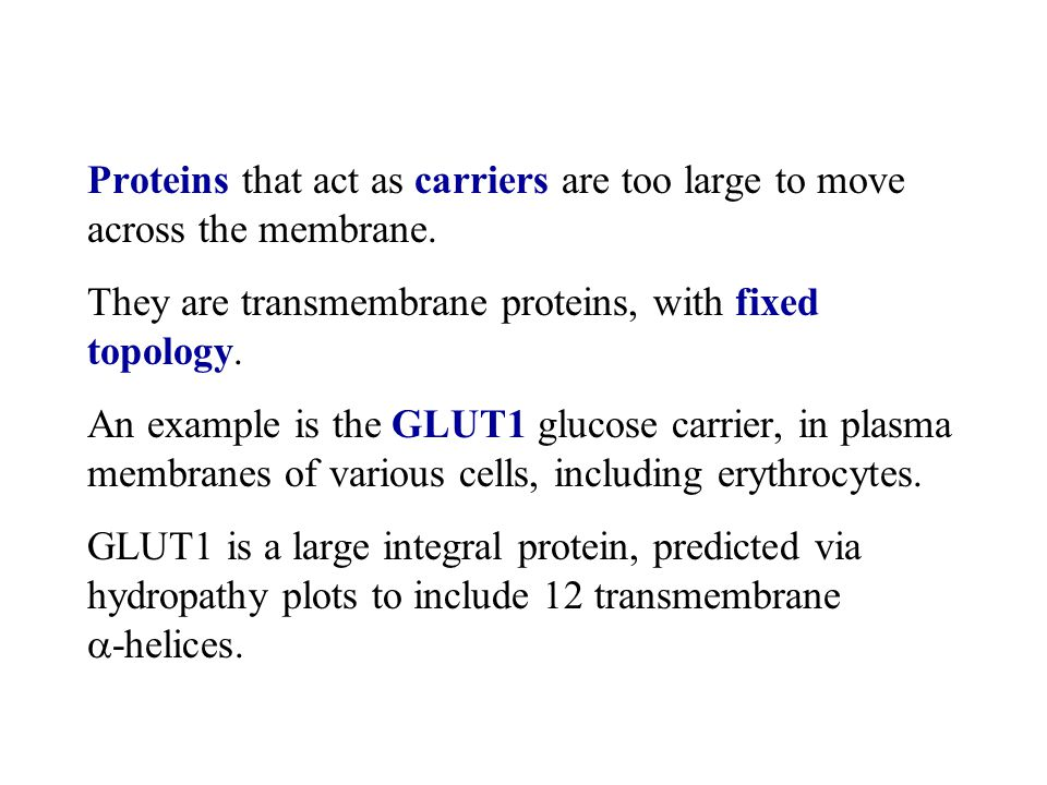 Proteins that act as carriers are too large to move across the membrane.