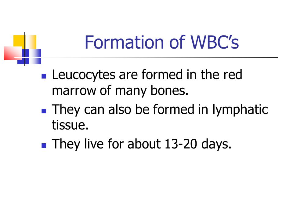 Formation of WBC's Leucocytes are formed in the red marrow of many bones. They can also be formed in lymphatic tissue.