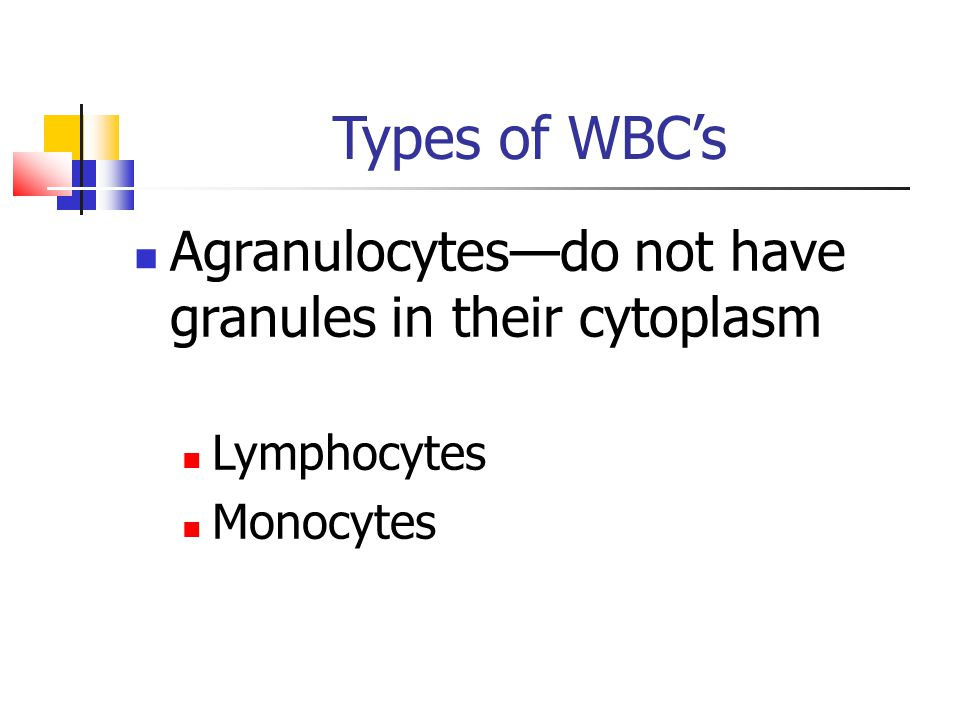 Types of WBC's Agranulocytes—do not have granules in their cytoplasm