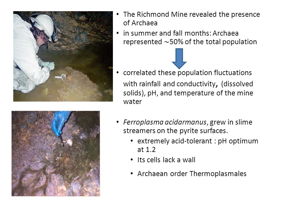 The Richmond Mine revealed the presence of Archaea