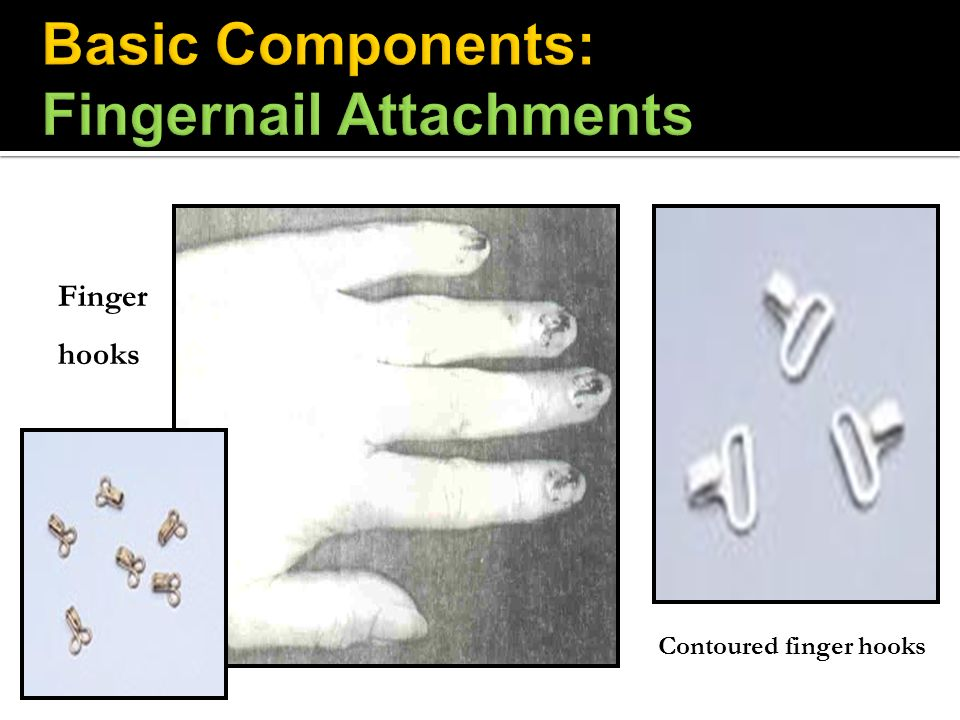 Basic Components: Fingernail Attachments