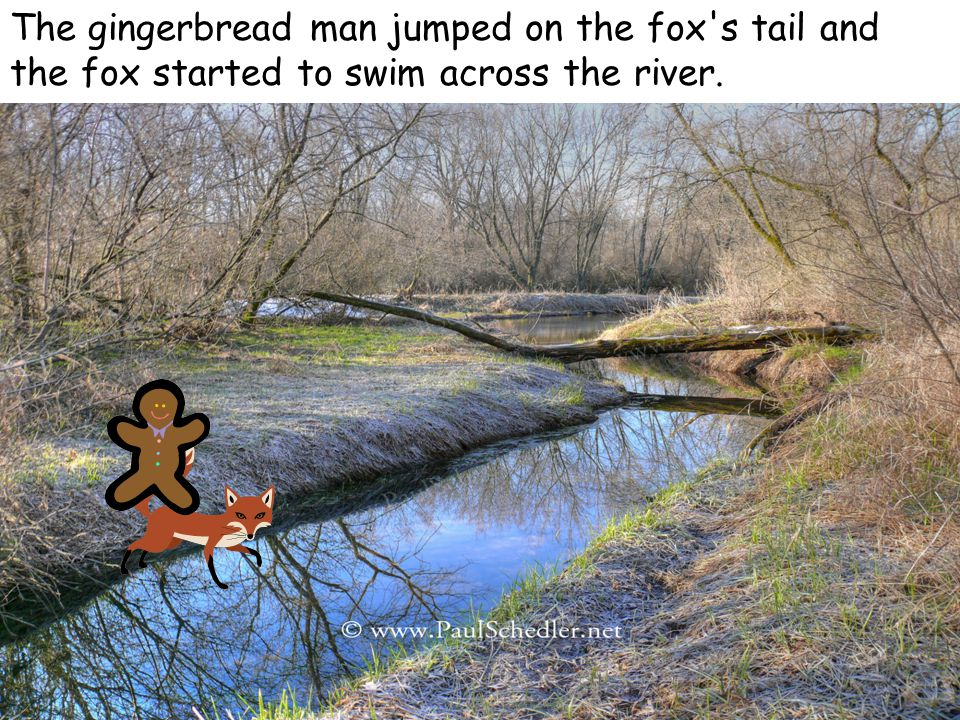 The gingerbread man jumped on the fox s tail and the fox started to swim across the river.