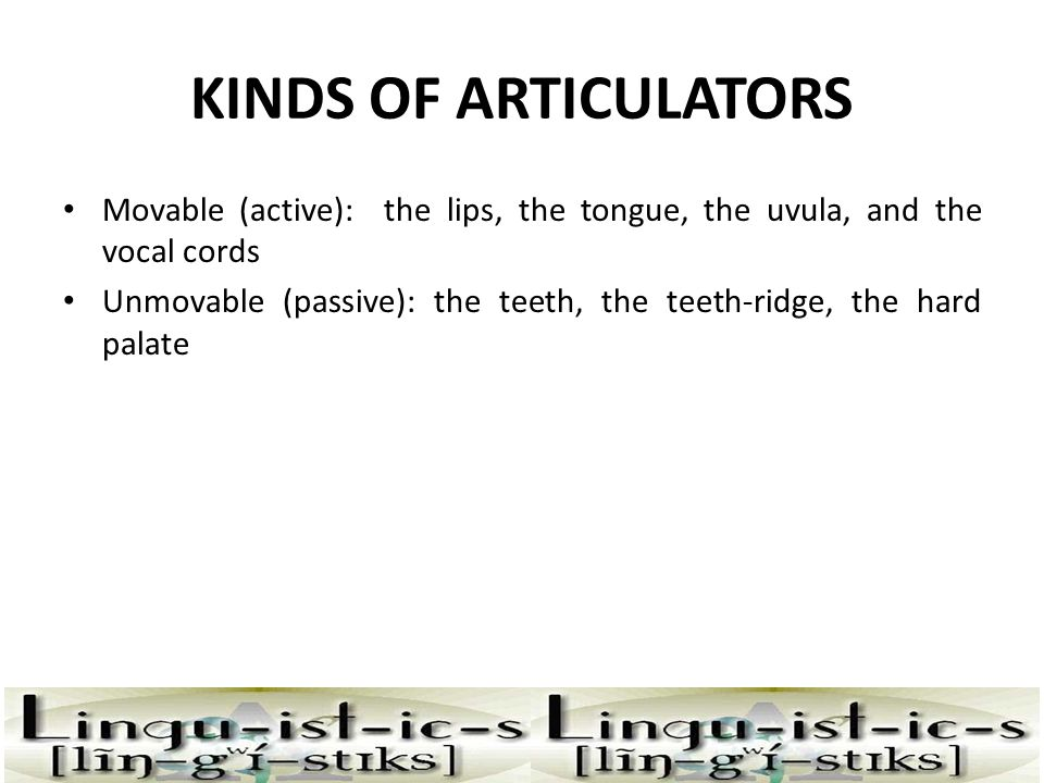KINDS OF ARTICULATORS Movable (active): the lips, the tongue, the uvula, and the vocal cords.