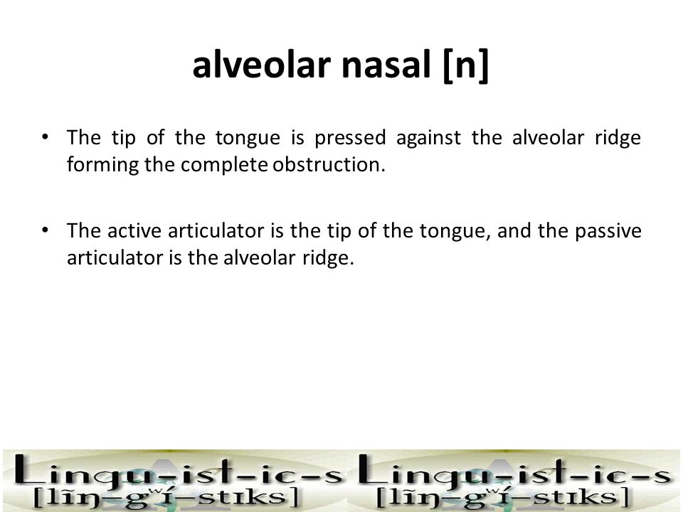alveolar nasal [n] The tip of the tongue is pressed against the alveolar ridge forming the complete obstruction.