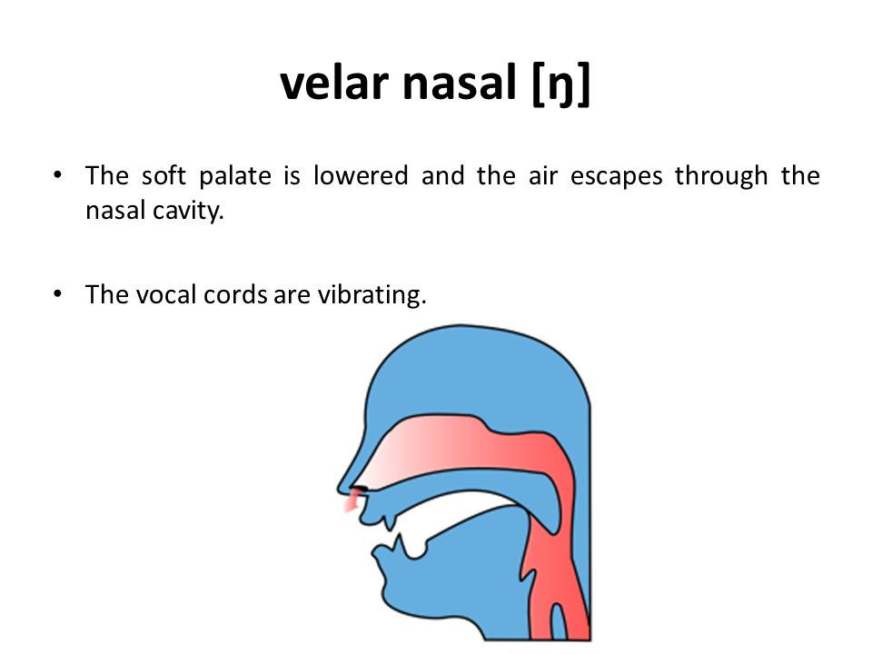 velar nasal [ŋ] The soft palate is lowered and the air escapes through the nasal cavity.