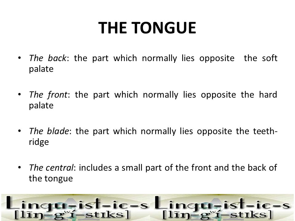 THE TONGUE The back: the part which normally lies opposite the soft palate. The front: the part which normally lies opposite the hard palate.