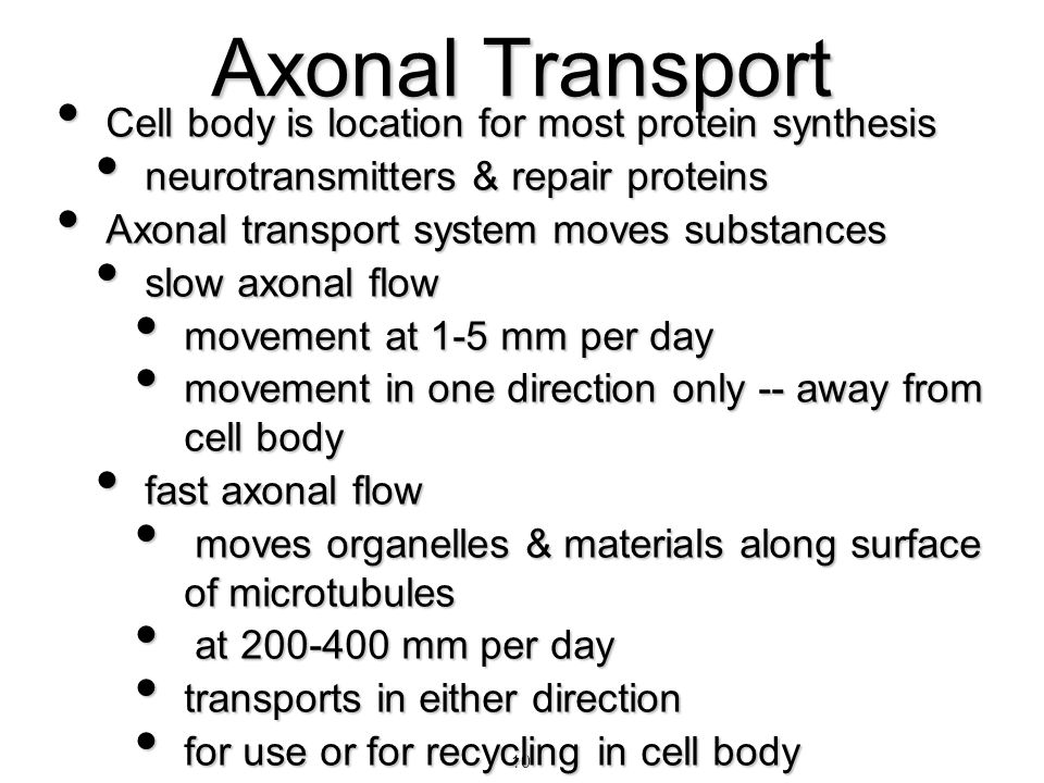 Axonal Transport Cell body is location for most protein synthesis