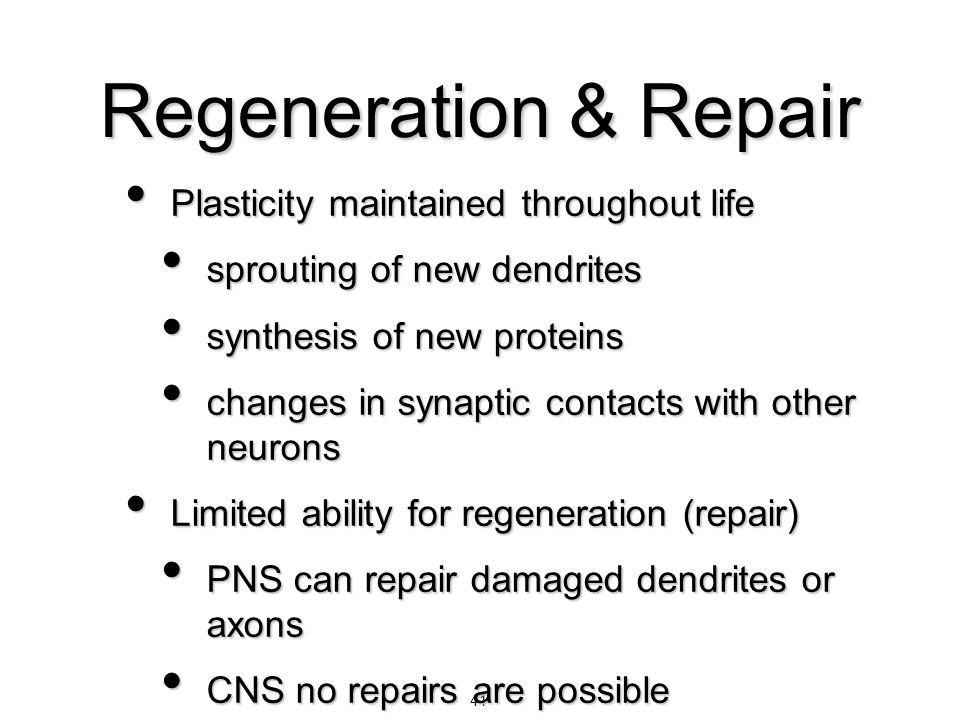 Regeneration & Repair Plasticity maintained throughout life