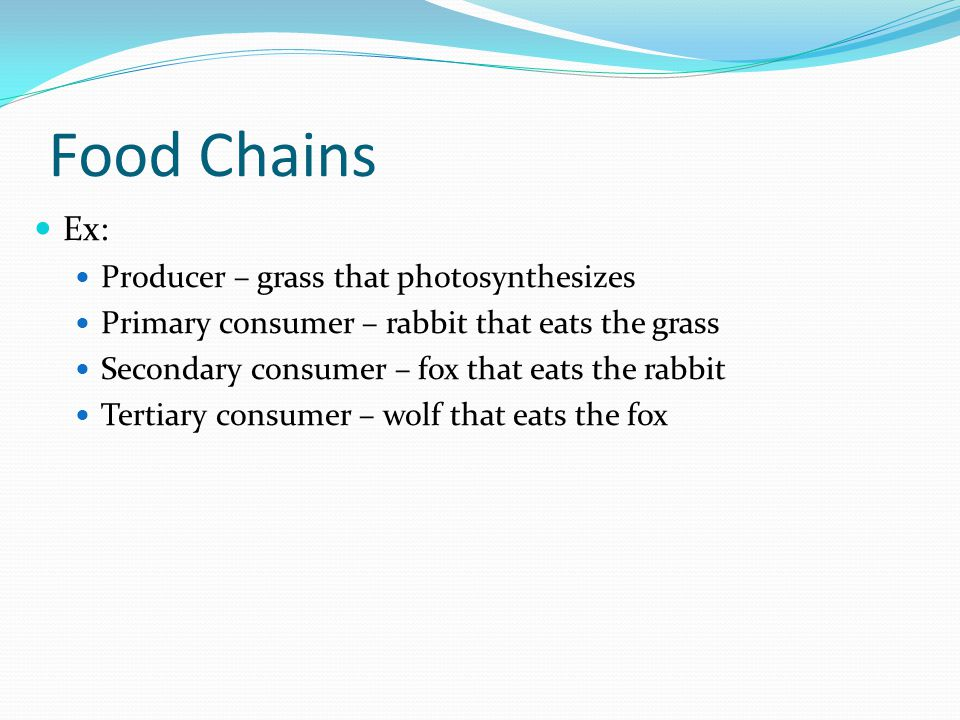 Food Chains Ex: Producer – grass that photosynthesizes