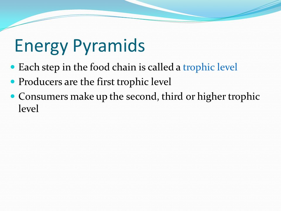 Energy Pyramids Each step in the food chain is called a trophic level