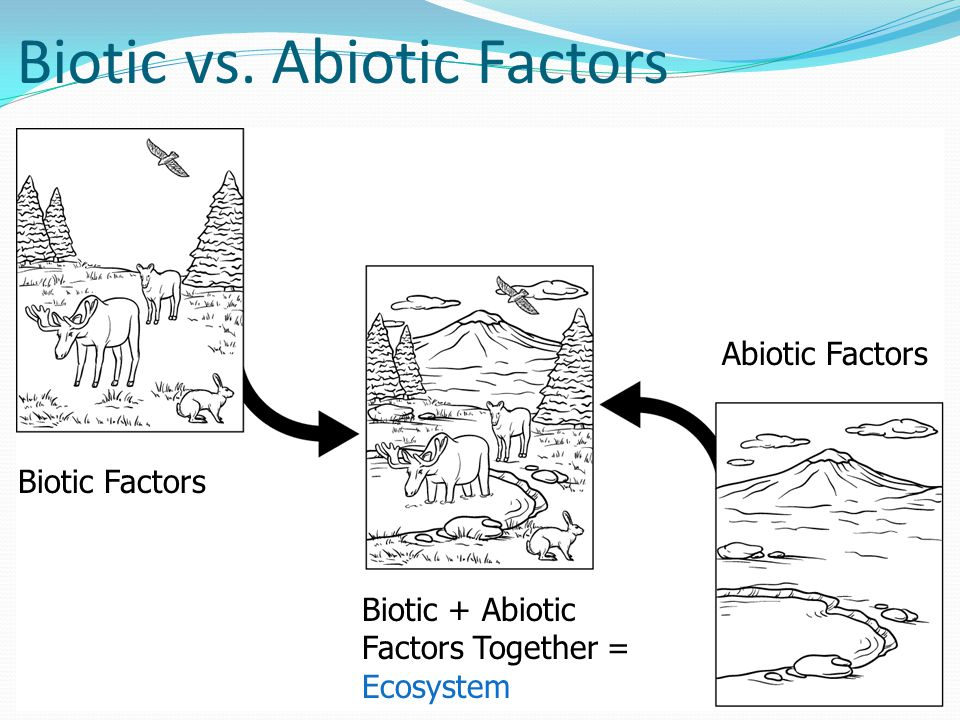 Biotic vs. Abiotic Factors