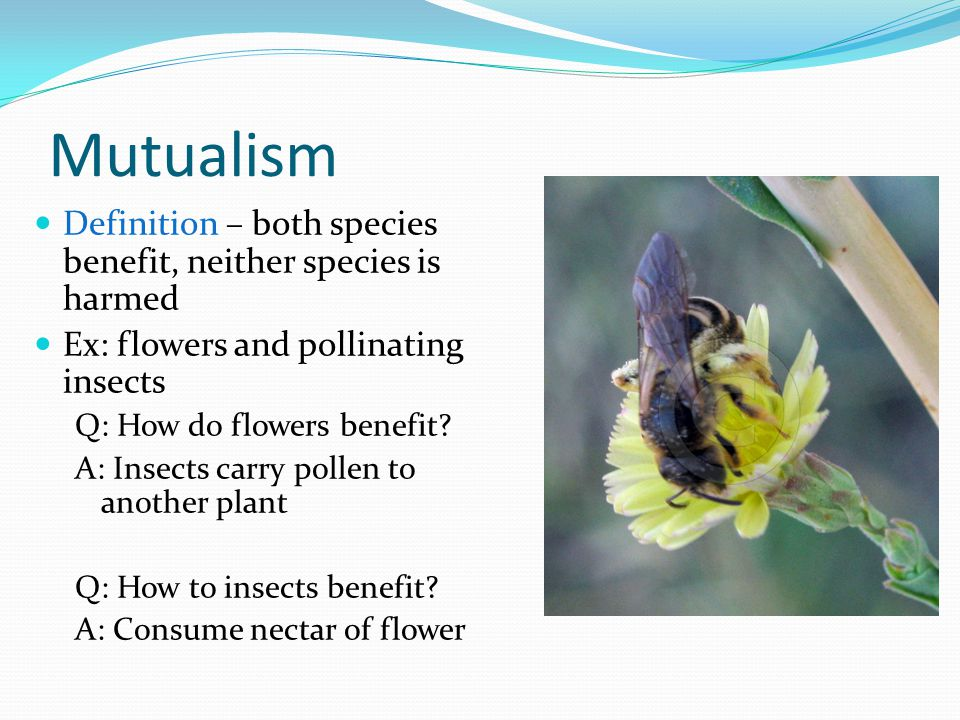 Mutualism Definition – both species benefit, neither species is harmed