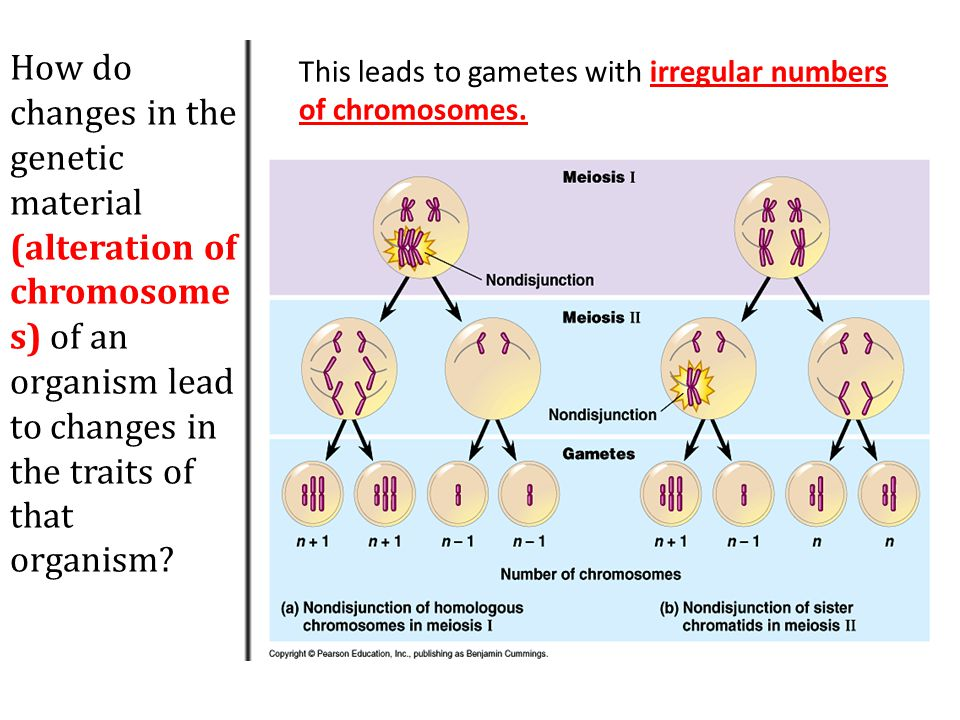 How do changes in the genetic material (alteration of chromosomes) of an organism lead to changes in the traits of that organism