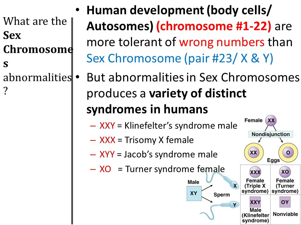Human development (body cells/ Autosomes) (chromosome #1-22) are more tolerant of wrong numbers than Sex Chromosome (pair #23/ X & Y)