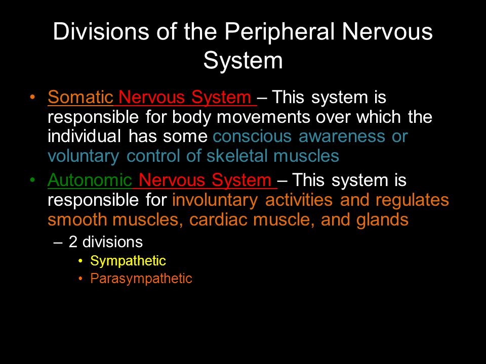 Divisions of the Peripheral Nervous System