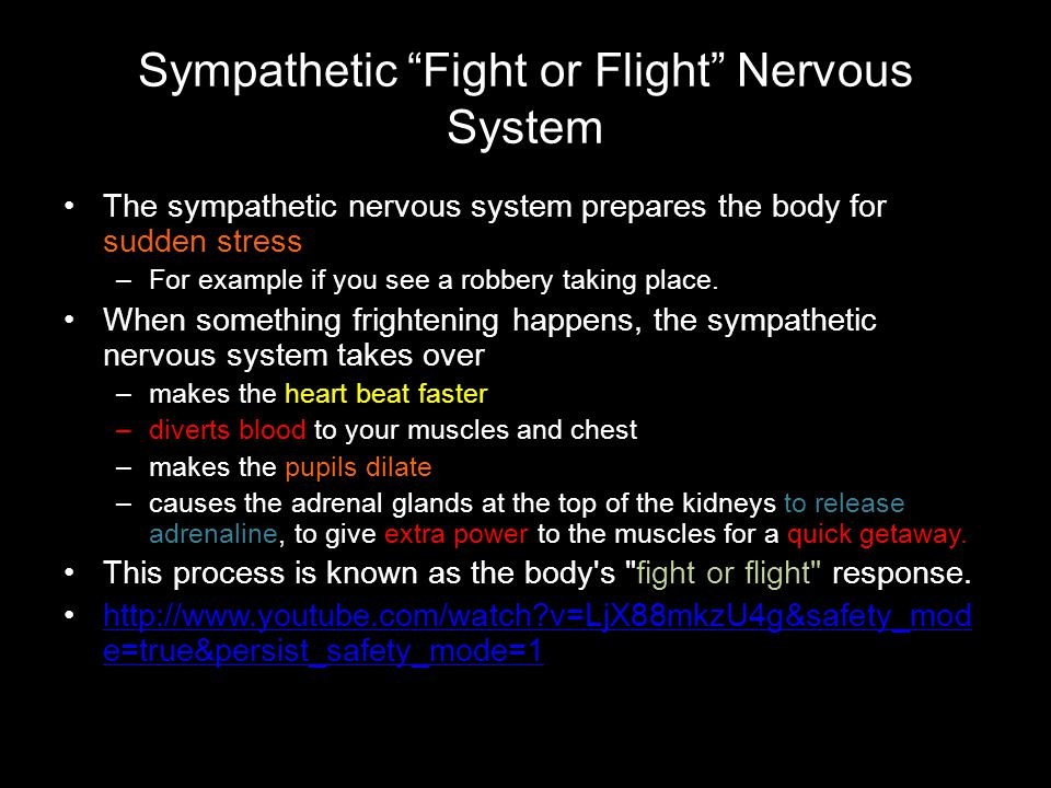 Sympathetic Fight or Flight Nervous System
