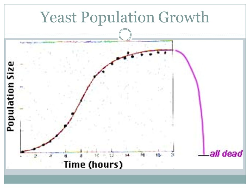 Yeast Population Growth