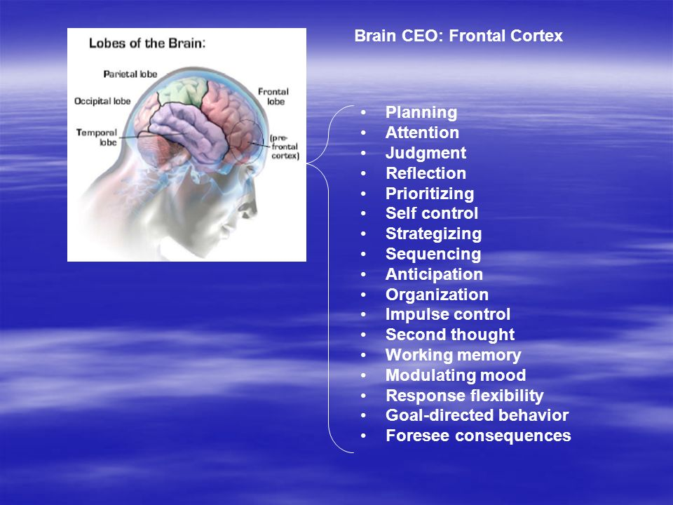 Forebrain Brain CEO: Frontal Cortex Planning Attention Judgment