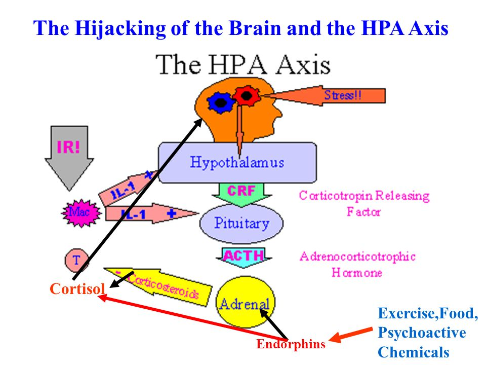 The Hijacking of the Brain and the HPA Axis