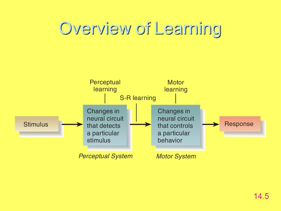 Overview of Learning 14.5 Dualism-mind is separate from the body