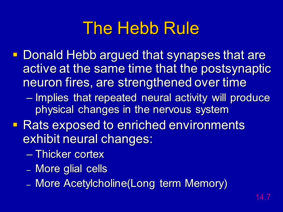 The Hebb Rule Donald Hebb argued that synapses that are active at the same time that the postsynaptic neuron fires, are strengthened over time.