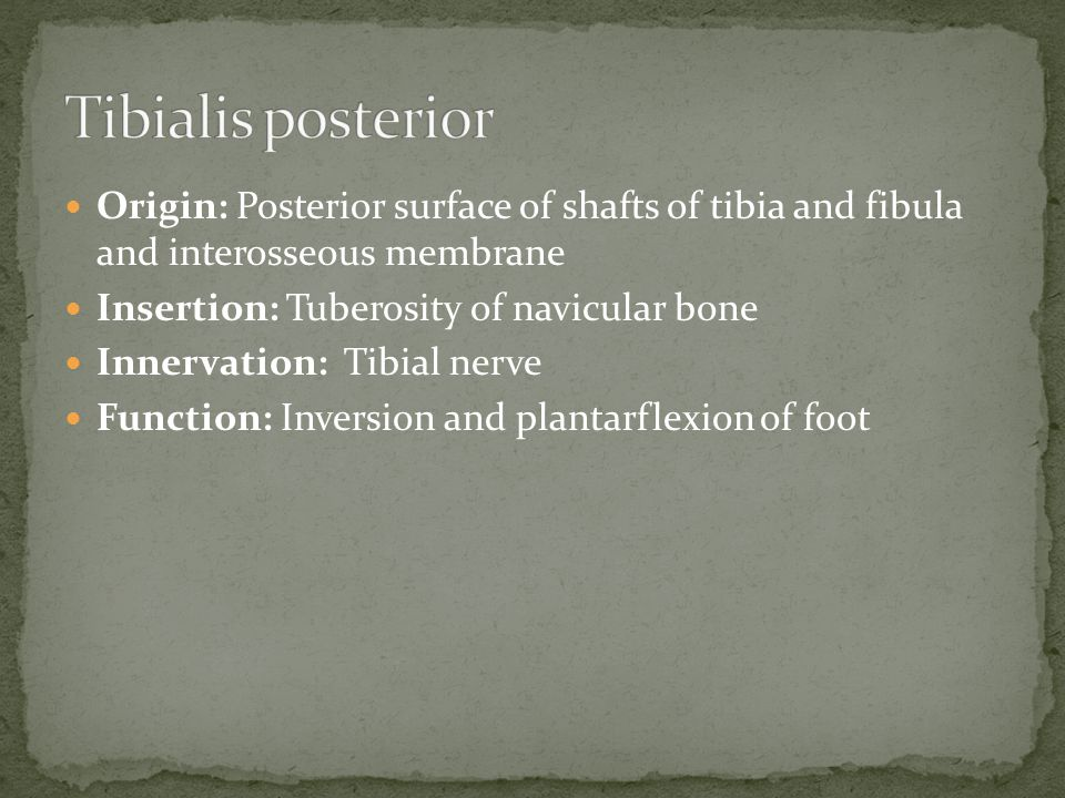 Tibialis posterior Origin: Posterior surface of shafts of tibia and fibula and interosseous membrane.