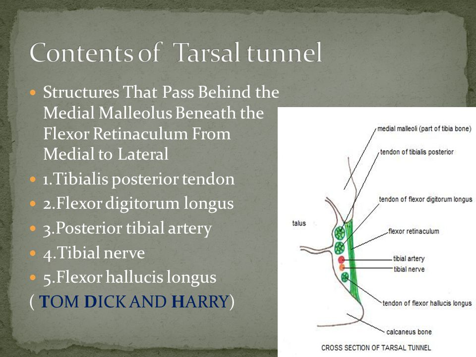 Contents of Tarsal tunnel