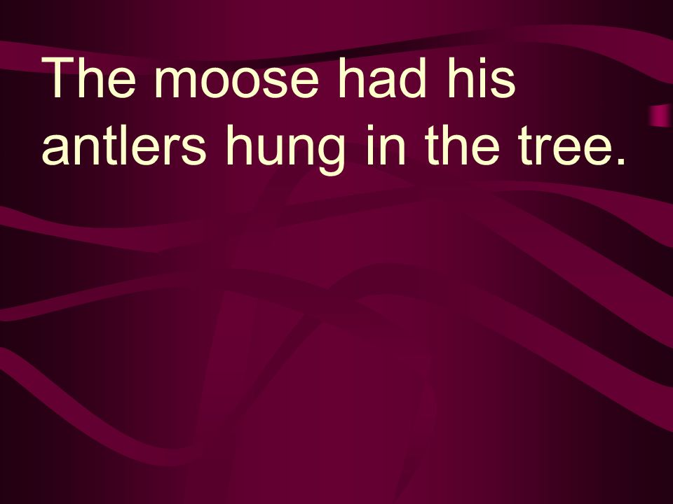 The moose had his antlers hung in the tree.