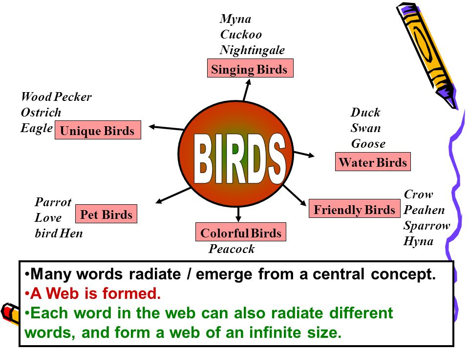 BIRDS Many words radiate / emerge from a central concept.