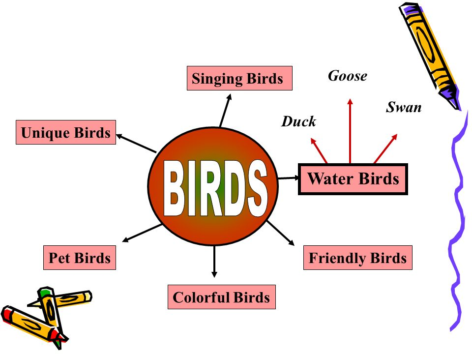 BIRDS Water Birds Singing Birds Friendly Birds Unique Birds Pet Birds
